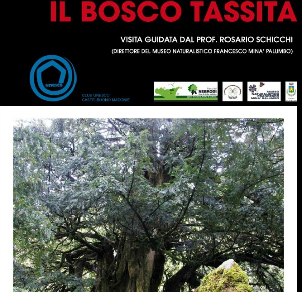 Tassita_locandinaweb_3_1 - Copia