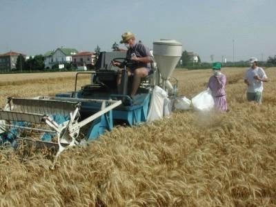 Agricoltura Sicilia