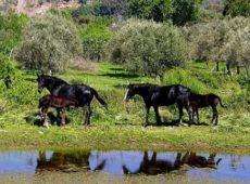 escursione-cavallo-nebrodi