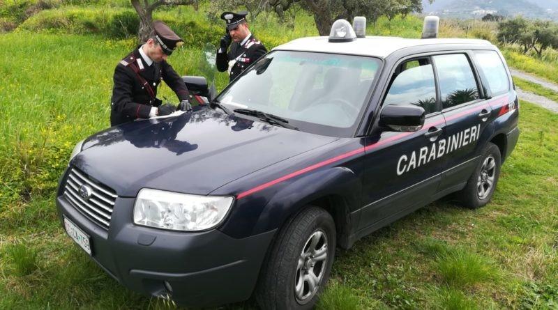 Caronia